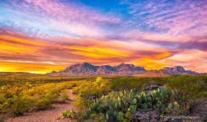 First Light on Chisos Mountains Big Bend National Park.jpg