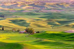 Steptoe Butte View with Red Barn Colfax Whitman County Washington Palouse.jpg
