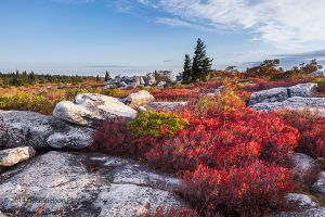 Autumn at Dolly Sods Wilderness, West Virginia