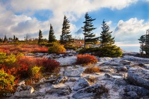 Bear Rocks Morning Light, Dolly Sods Wilderness, West Virginia