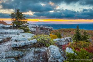 Bear Rocks Preserve Sunrise, Dolly Sod Wilderness, West Virginia