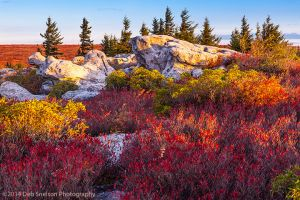 Blueberry Brilliance, Dolly Sods Wilderness, West Virginia