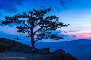 Dusk on a lone tree, Blue Ridge Parkway, VA