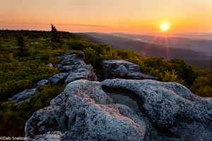 Golden Twist of Dawn, Bear Rocks Preserve, Dolly Sods Wilderness, West Virginia