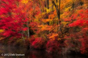 Fall Brilliance, Hidden Lake, Delaware Water Gap, Pennsylvania