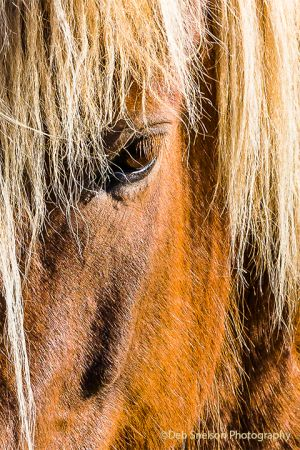 Icelandic Horse Up Close.jpg