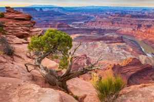 Juniper at Rim of  Dead Horse Canyon Utah.jpg