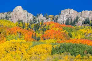 Kebler Pass Color in Autumn Aspens Colorado.jpg