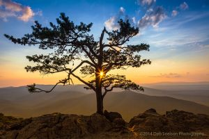 Sunburst at Ravens Roost Overlook, Blue Ridge Parkway, Virginia