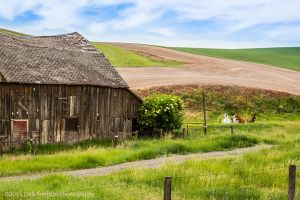 Barn with horses  Endicott Palouse Washington.jpg