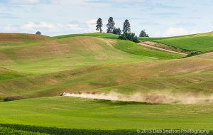 Dirt road with dust trail Colfax Washington Palouse.jpg
