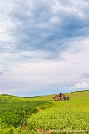 Lone Shed mm33 rte 270 at sunset Pullman Washington Palouse.jpg