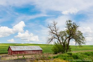 Red shed with lone tree and railroad Colfax Washington Palouse.jpg
