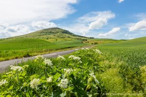 Road to Steptoe Butte Colfax Washington Palouse.jpg