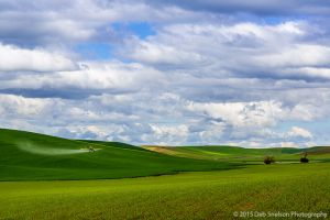 Scenic vista with crop duster Washington Palouse.jpg