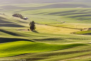 Steptoe Butte Green Valley  Colfax Washington Palouse.jpg