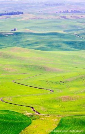 Steptoe Butte View - abstract Colfax Washington Palouse.jpg