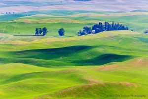 Steptoe Butte View - quilted hills Colfax Washington Palouse.jpg