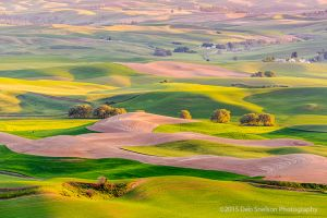 Steptoe Butte View Multicolored Coat Colfax Whitman County Washington Palouse.jpg