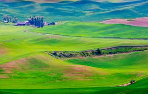 Steptoe Butte View lush countryside Colfax Washington Palouse.jpg