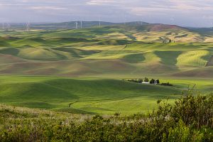 Steptoe Butte View of Windfarm  Colfax Washington Palouse.jpg