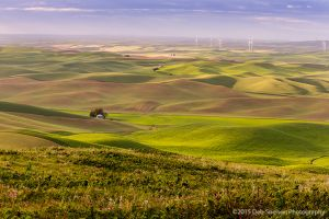 Steptoe Butte View with Windfarm Colfax Whitman County Washington Palouse.jpg