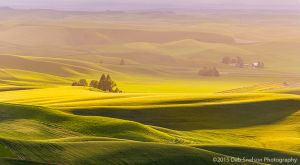 Steptoe View - green, gold and purple Palouse Washington.jpg