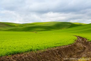 Wheat Fields of Endicott Washington Palouse.jpg