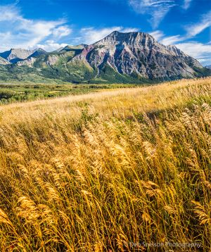 Canadian Rockies and Tall Grass.jpg