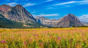 Fireweed and Many Glacier Glacier National Park Montana-c77.jpg