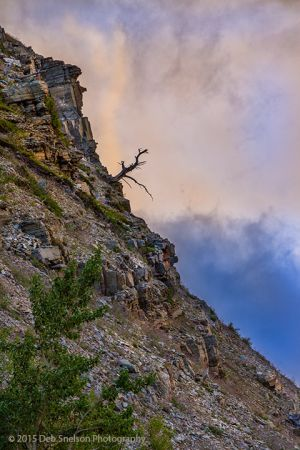 Lone Tree on Mt Grinnell Glacier National Park Montana-c86.jpg