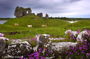 Castle at Clonmacnoise County Offaly Ireland cows River Shannon.jpg