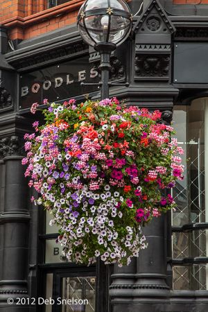 Flowers on Grafton Street Dublin Ireland.jpg
