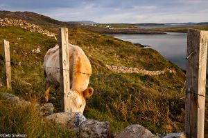 Upper Sky Road Clifden County Galway Ireland.jpg