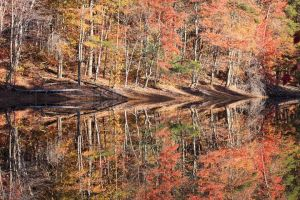 Fall Reflections Ragged Mountain Reservoir Charlottesville Virginia.jpg