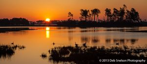 Sunrise Chincoteague Island Assateague National Wildlife Refuge Virginia Eastern Shore Marsh geese silhouettes tranquility golden.jpg
