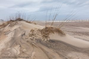 A Sand Dune at Outer Banks North Carolina.jpg