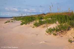 Early morning light on Salvo Beach Outer Banks OBX North Carolina NC.jpg