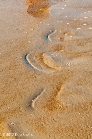 Footprints on the Beach Outer Banks North Carolina NC Salvo.jpg