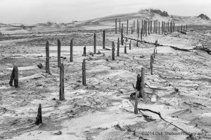 Ghostly sand fence at Outer Banks North Carolina.jpg