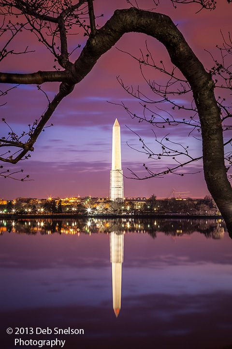 washington monument washington dc tidal basin blue moment predawn cherry tree framing low light photography